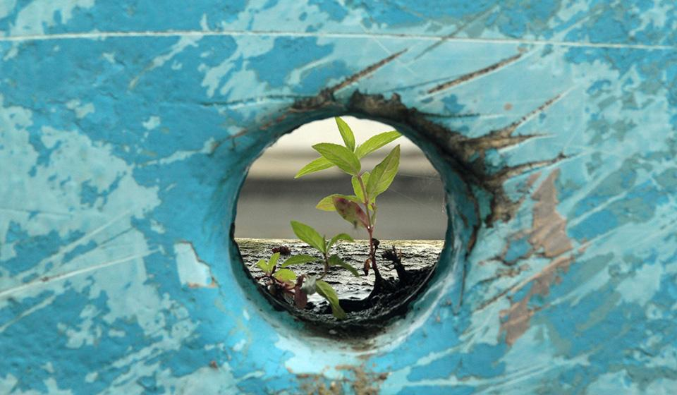 Resilience Plant